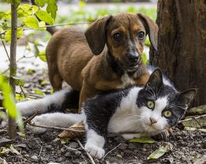 försäkring katt